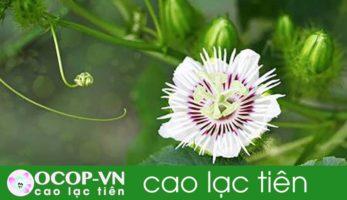 Cây Lạc Tiên có mấy loại, đâu là loài dùng trong đông y?